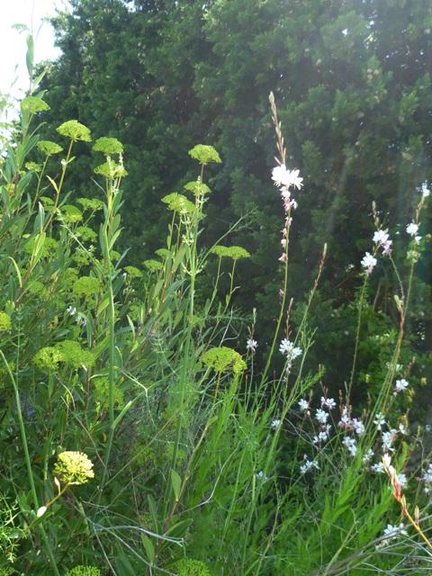 June 2012 terrain for Jardin sec