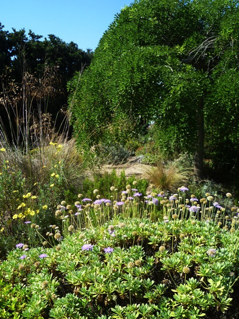 Le Jardin Sec Terrain