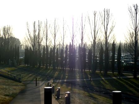 5 poplars