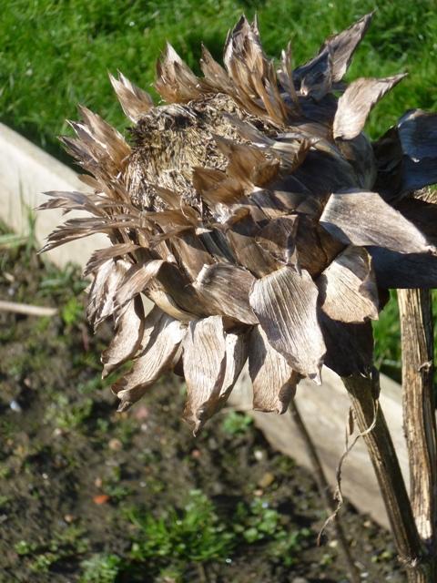 artichoke 2012