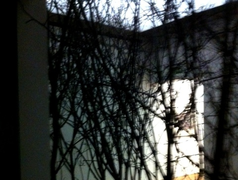 photo (2).JPGolaf