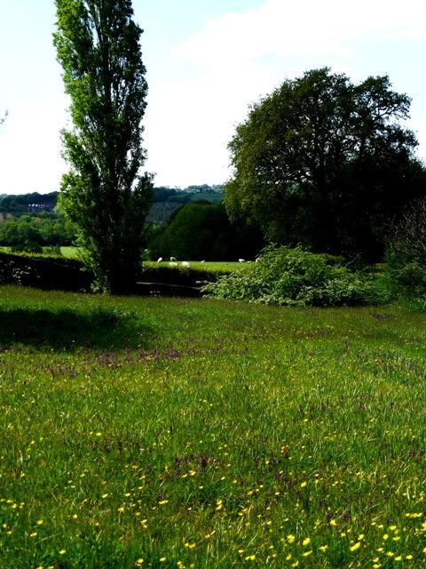 16 meadow