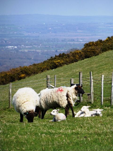 9 sheep