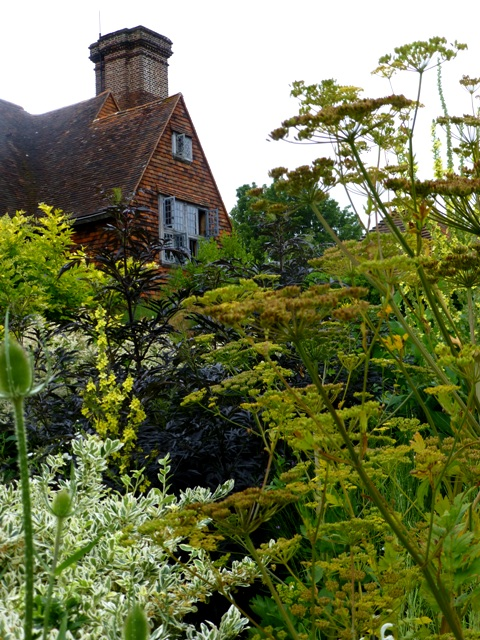 long border fennel + vrebascum