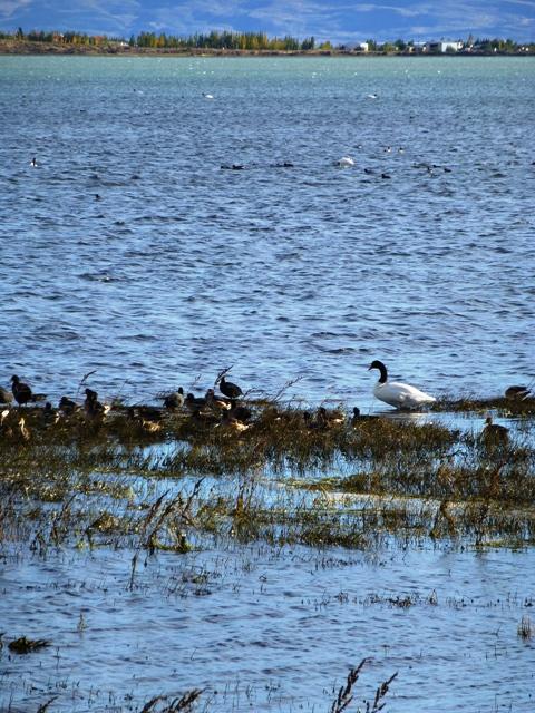 7lago birds