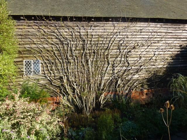 fig 2 barn garden