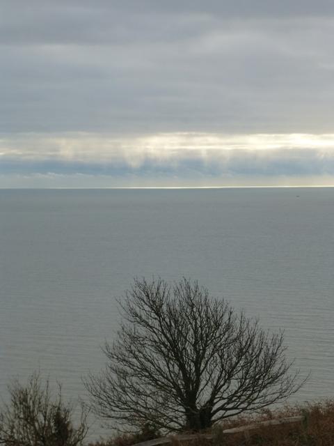 oak + horizon