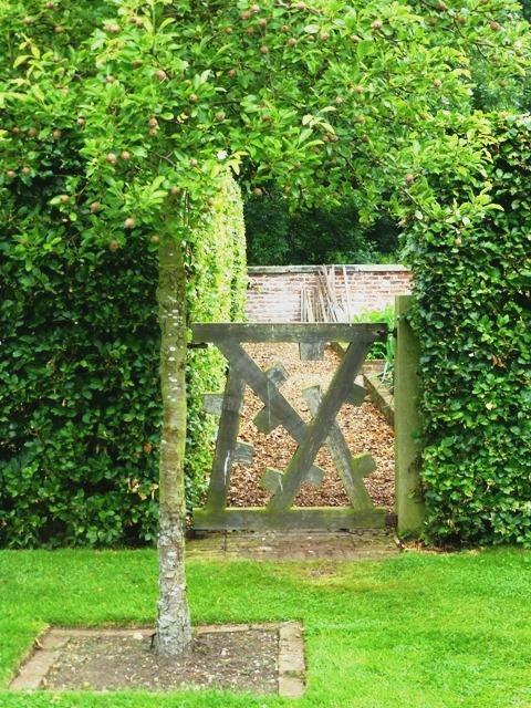 cut flower garden to veg garden14