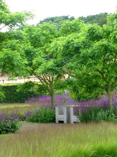 drift garden phellodendron + salvia p rain1