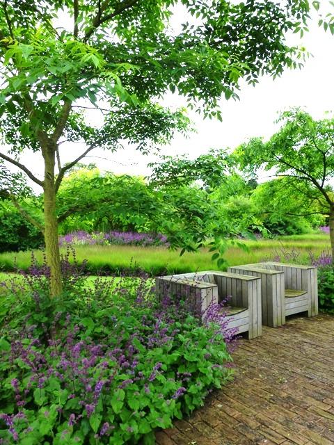 drift garden phellodendron + salvia purple rain2