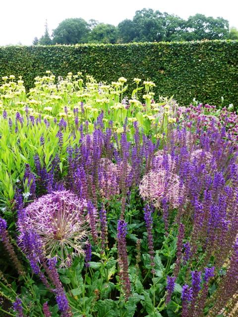 perennial meadow salvi, allium schuberti, phlomis,amsonia11