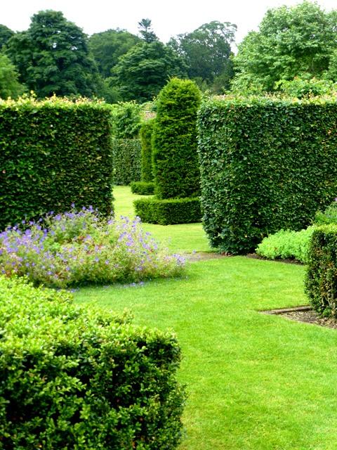 spring box border - beech hedges + geranium 'brookside'4