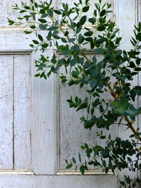 camellia  entrance 2