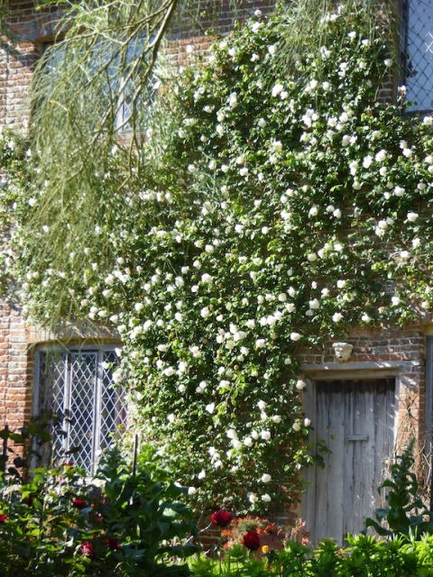 mme alfred carriere rose cottage garden sissinghurst