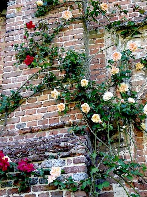 rosees sissinghurst