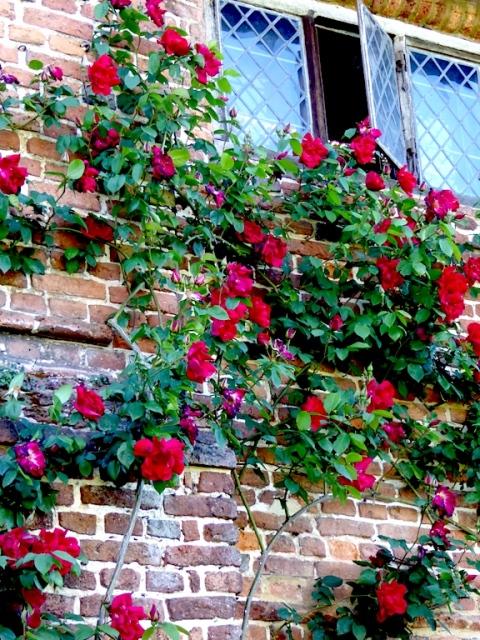 sissinghurst roses 2