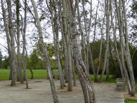 poplares 1
