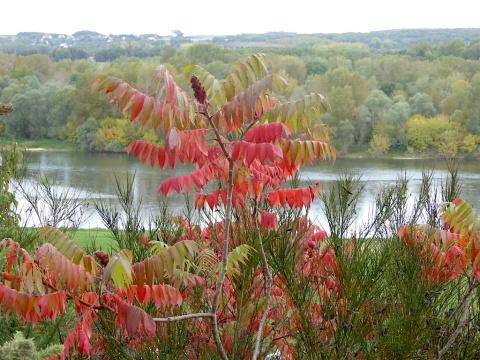 rhus + Loire