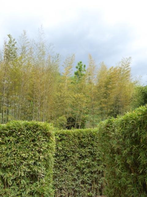 bamboo maze 2