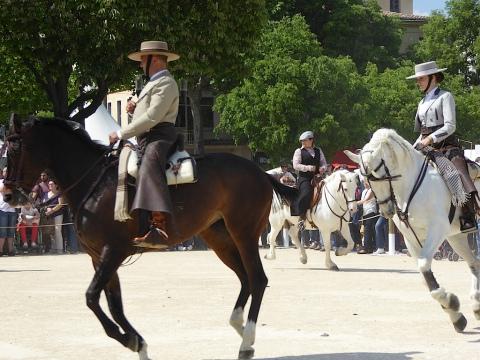 horse skills 3