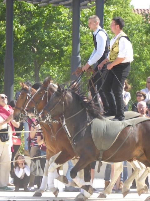 horse skills