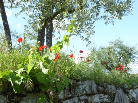 terrace poppies olive copy