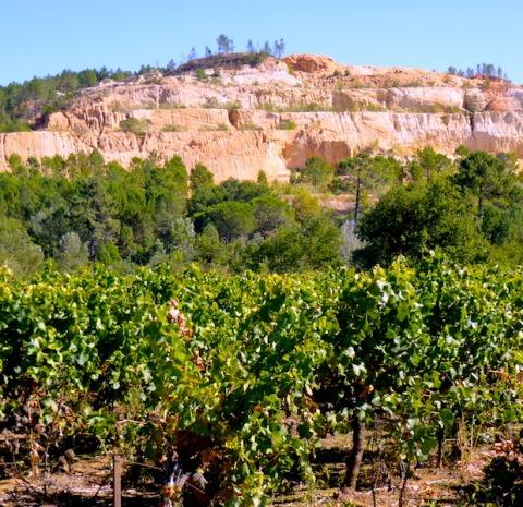 quarry-vines
