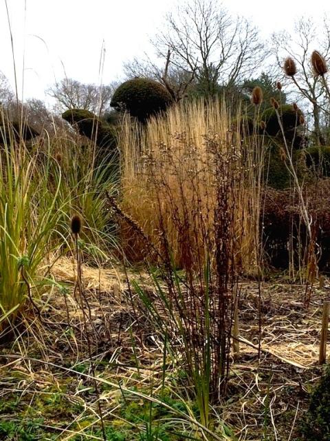 calamagrostis-peacock-gardenjpg