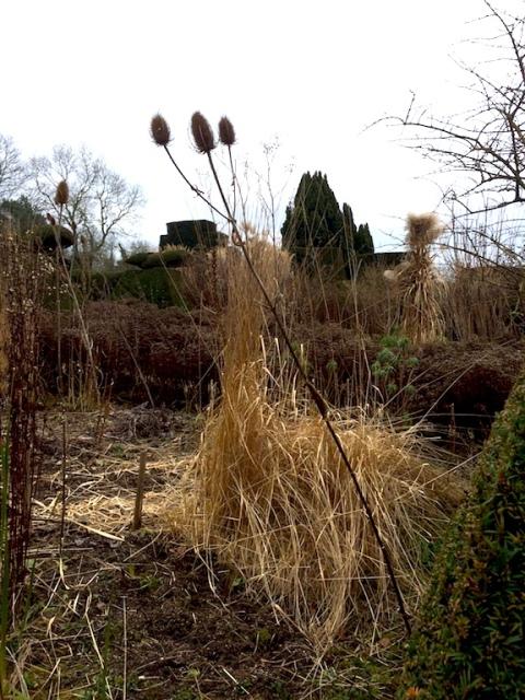 miscanthus-dipsacus-peacock-garden
