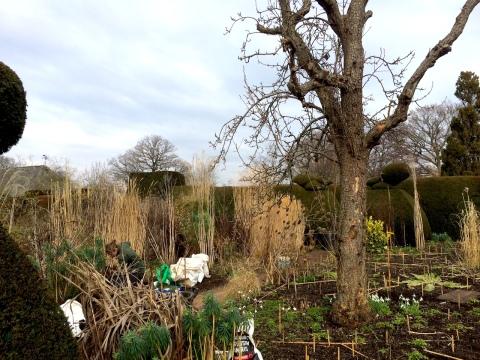peacock-garden-work